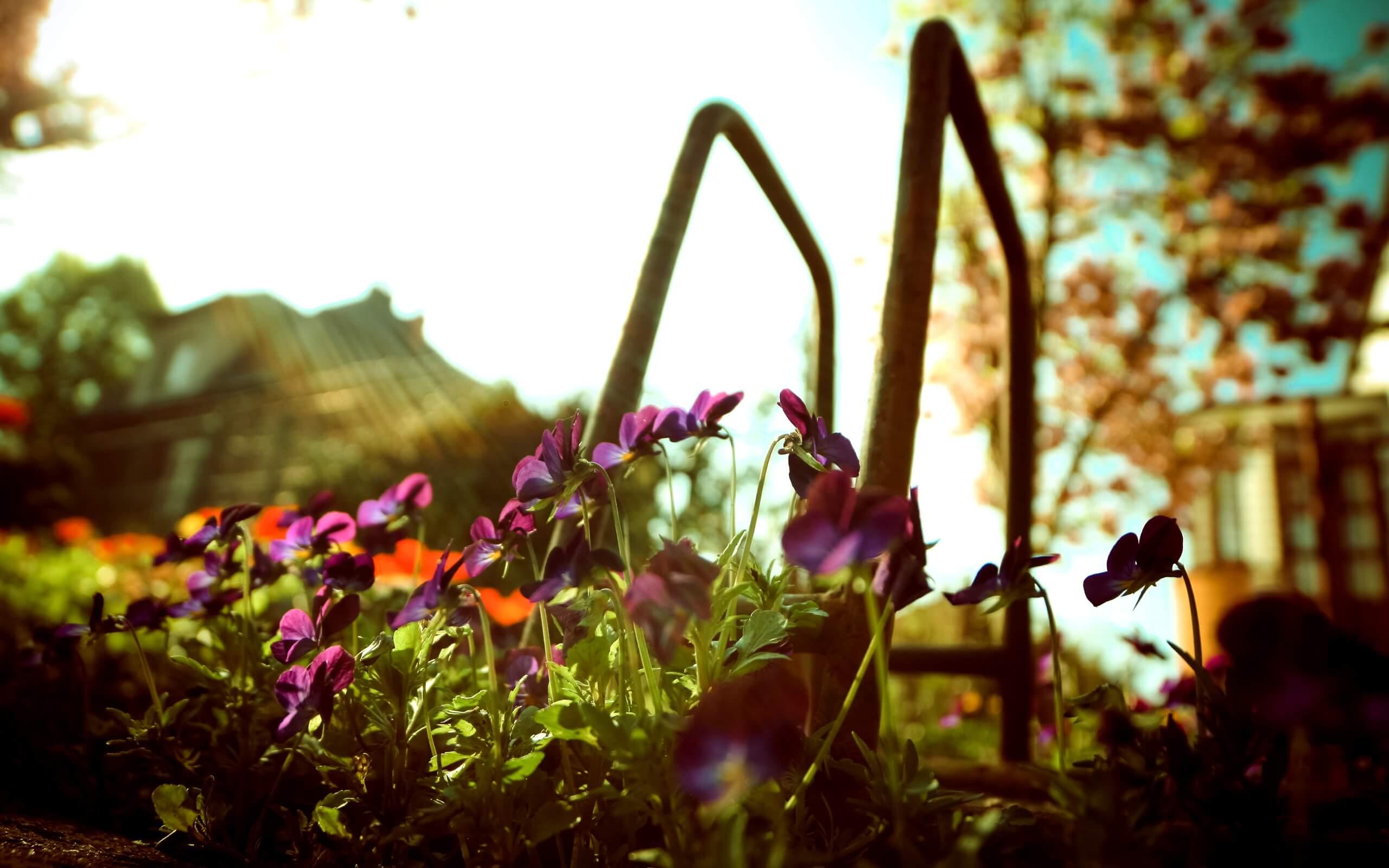 春の光と花1