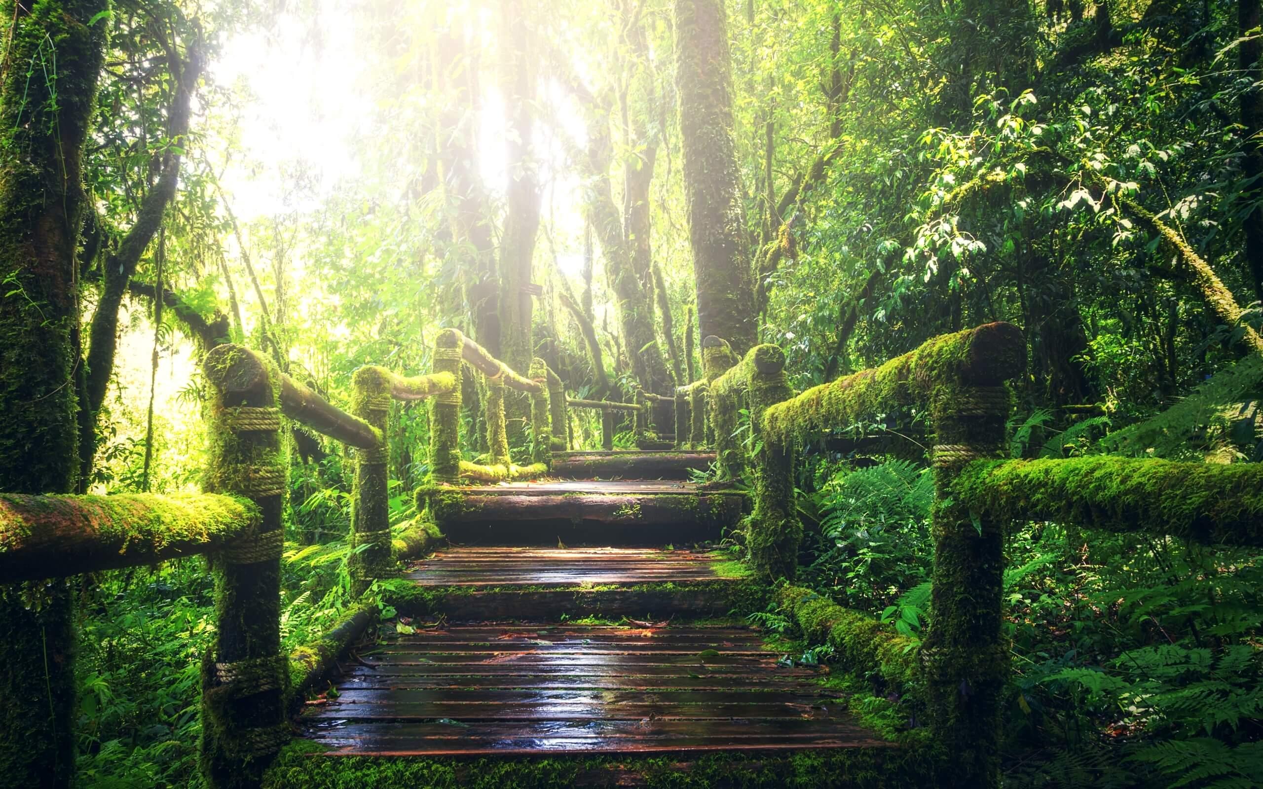 夏の雨の森