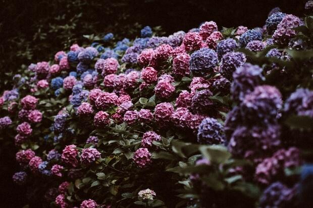 iPad12.9インチロック画面等のおしゃれな花の無料壁紙・待受けを配信中!