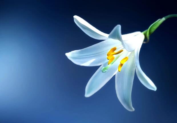 【おすすめ】LINEプロフィール用の花の写真画像が取り放題!