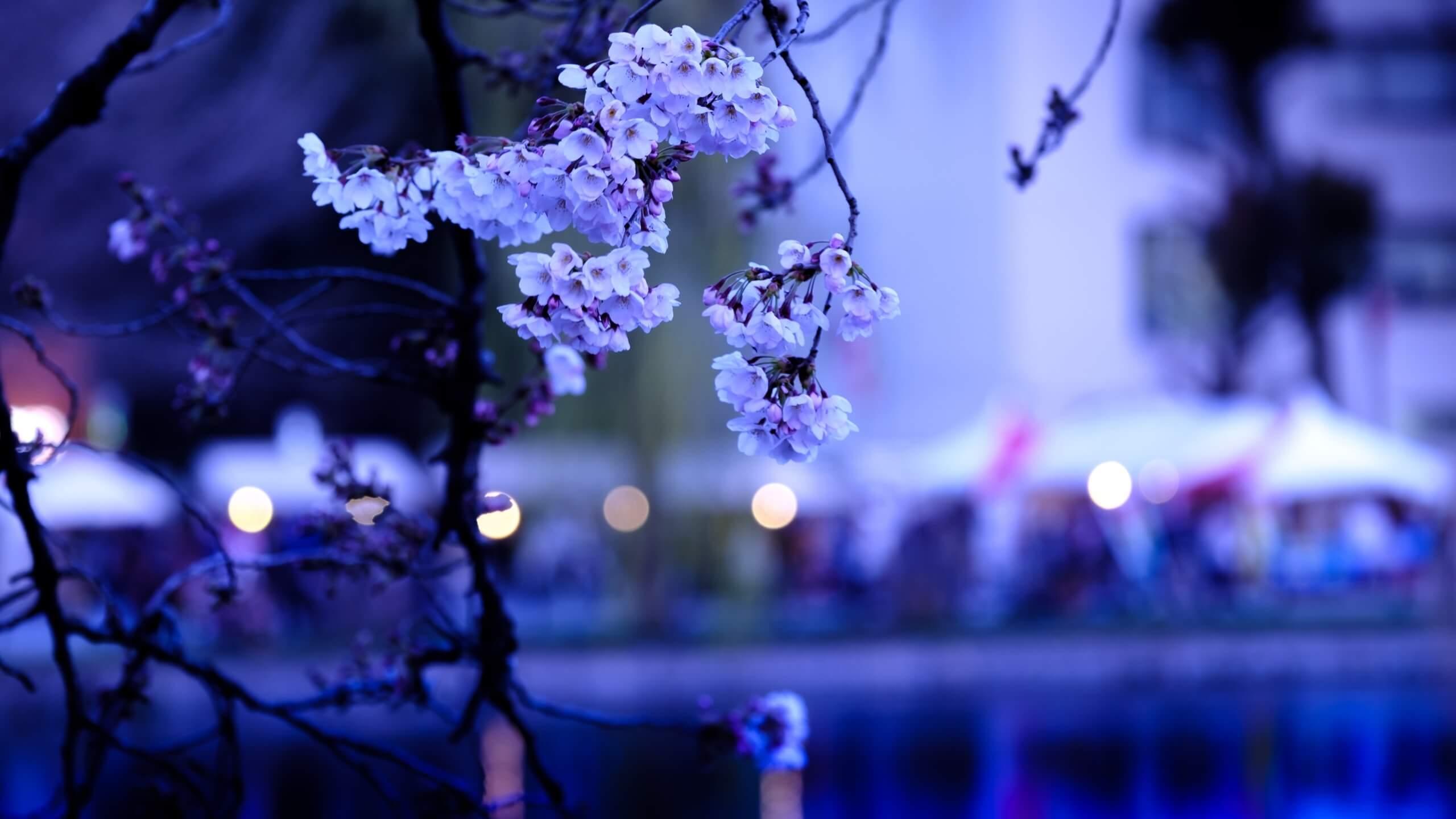 春の桜祭り