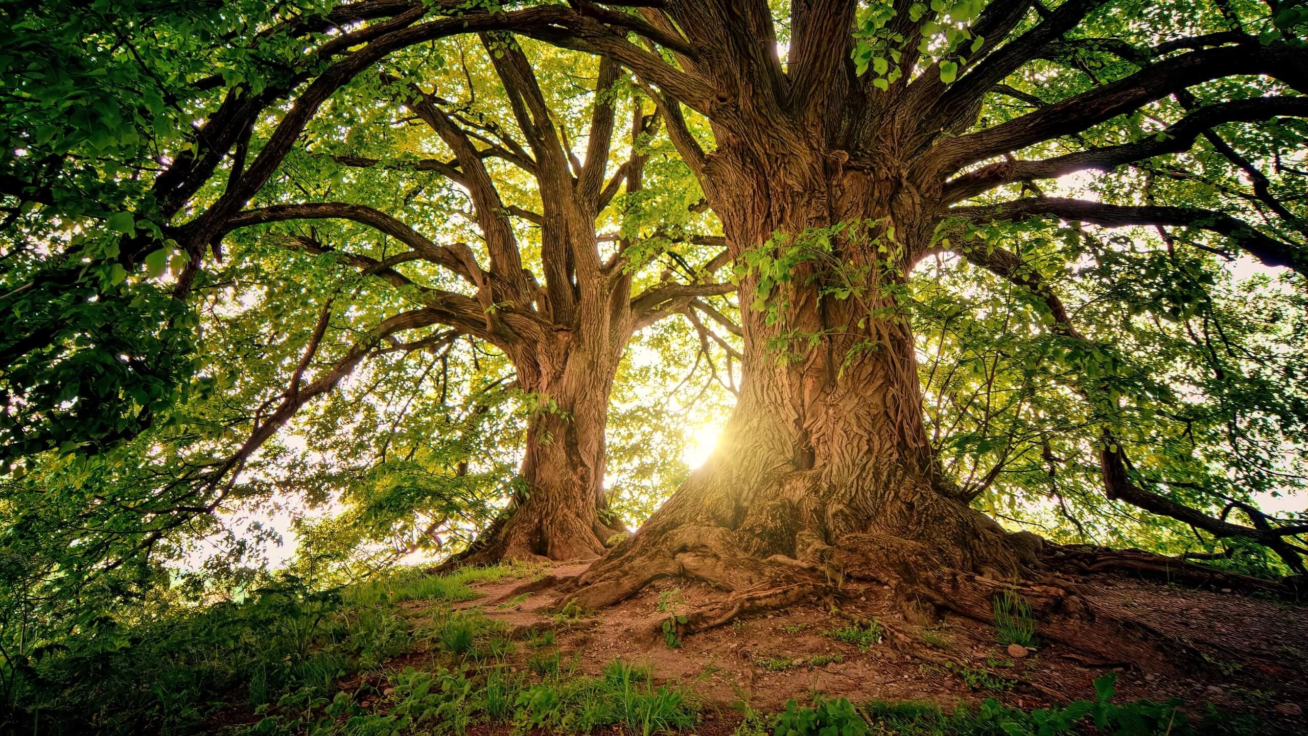 夏の木漏れ日と木