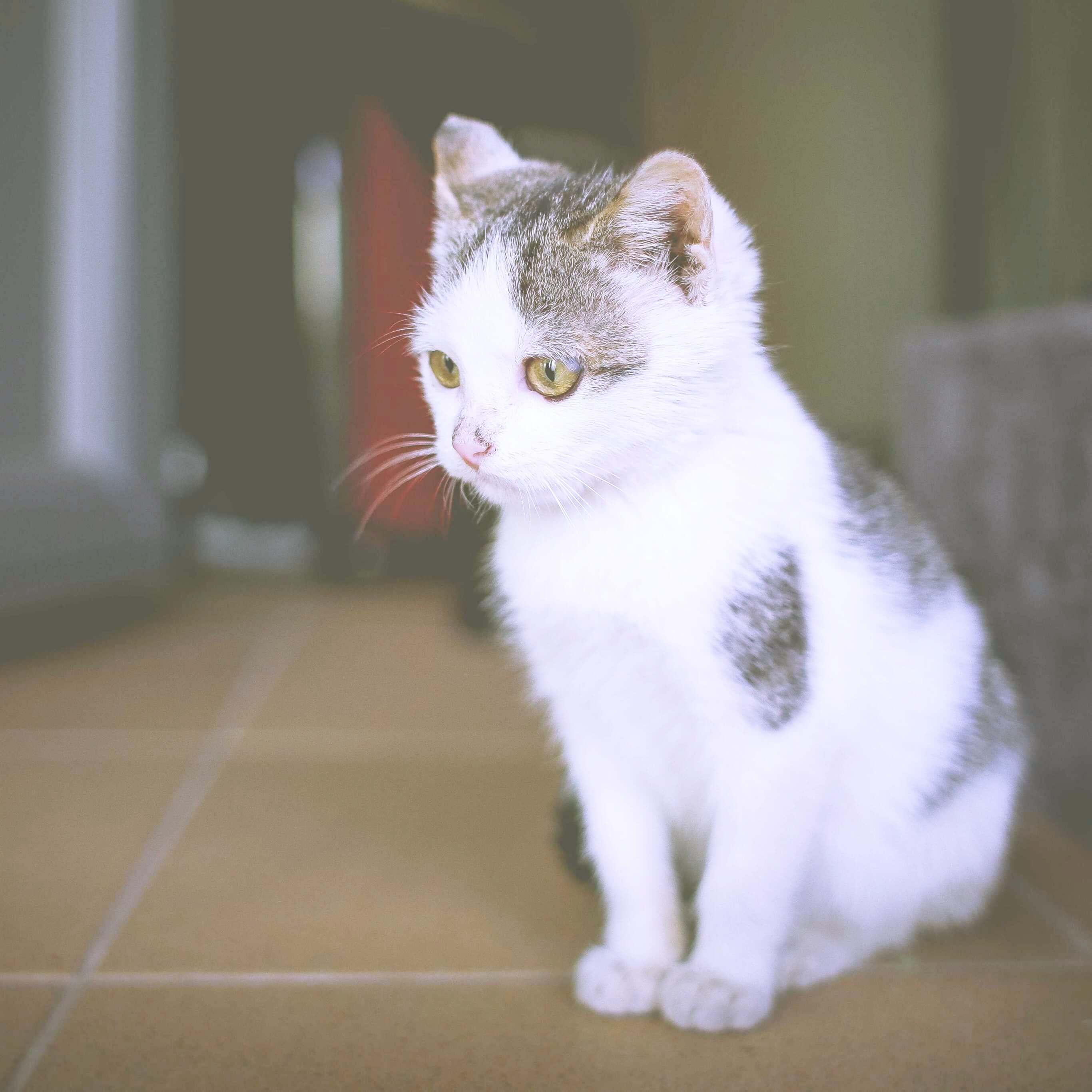 ぼーっとしてる猫
