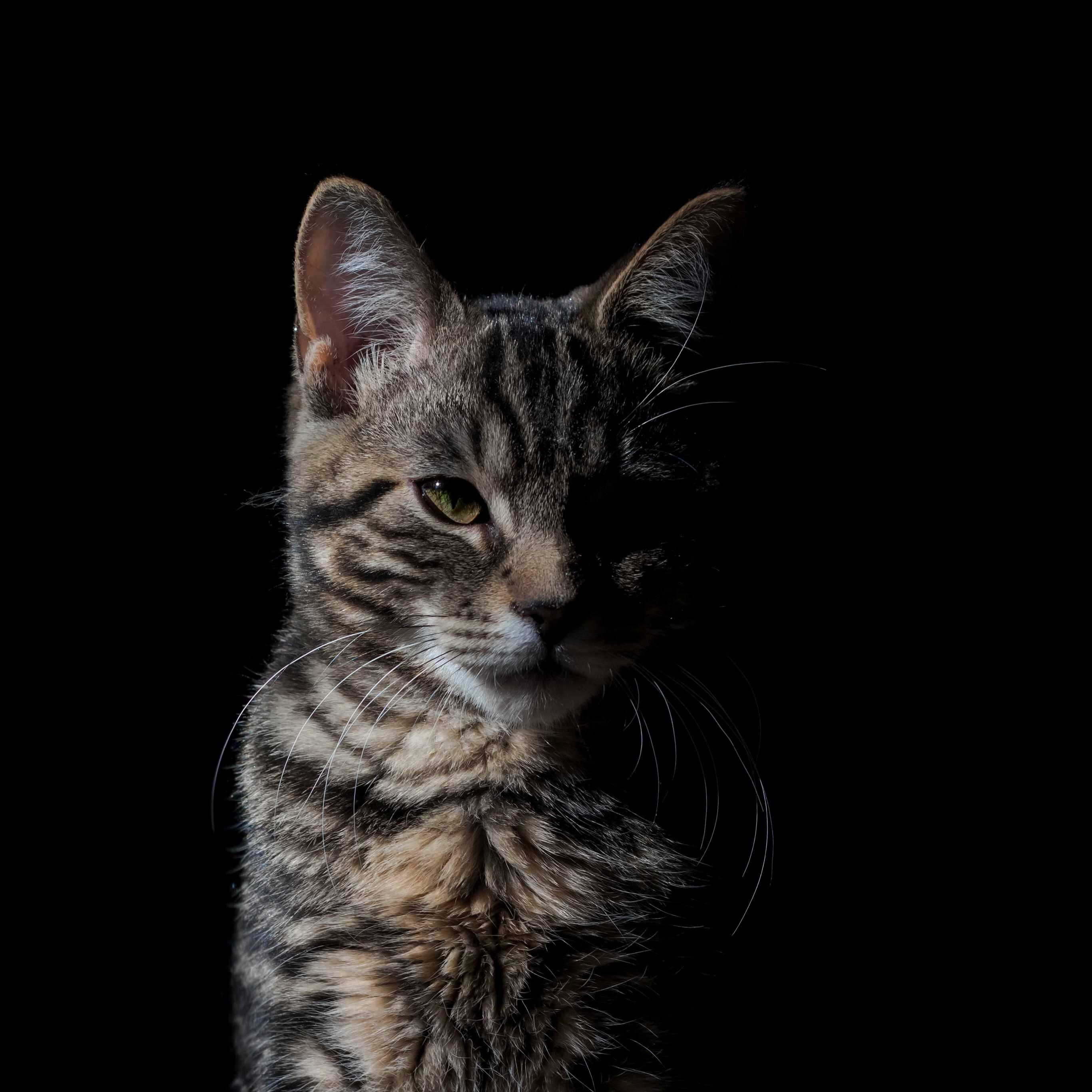 無表情の猫
