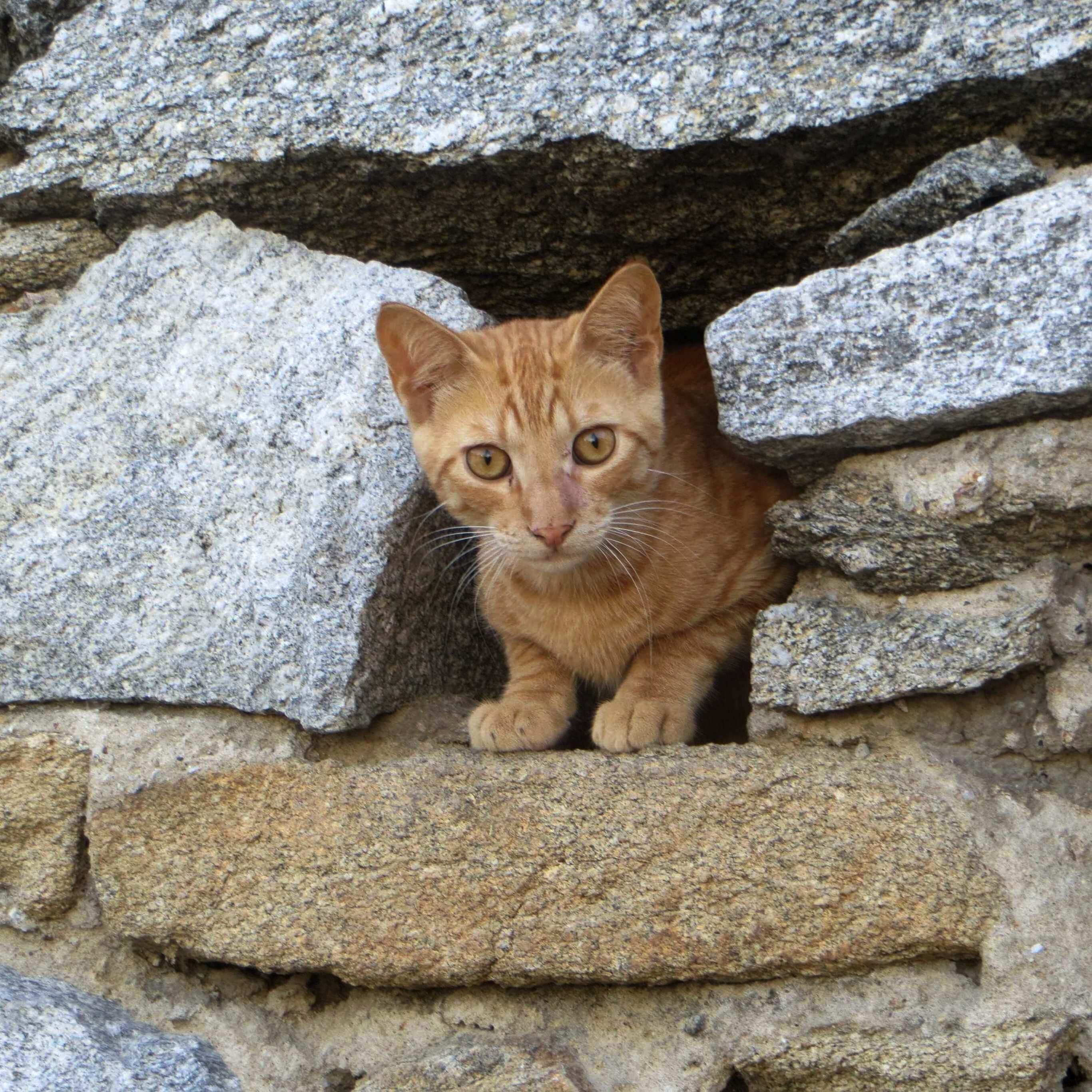 石垣の間の猫