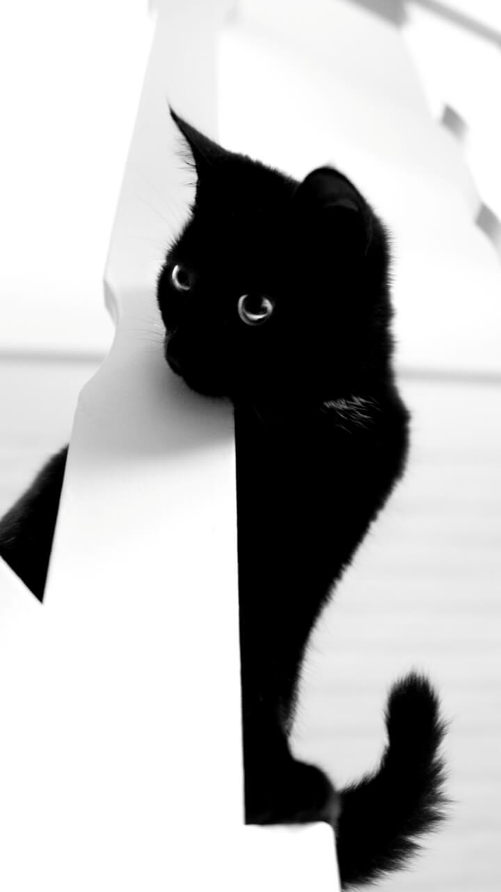 白い背景に黒猫