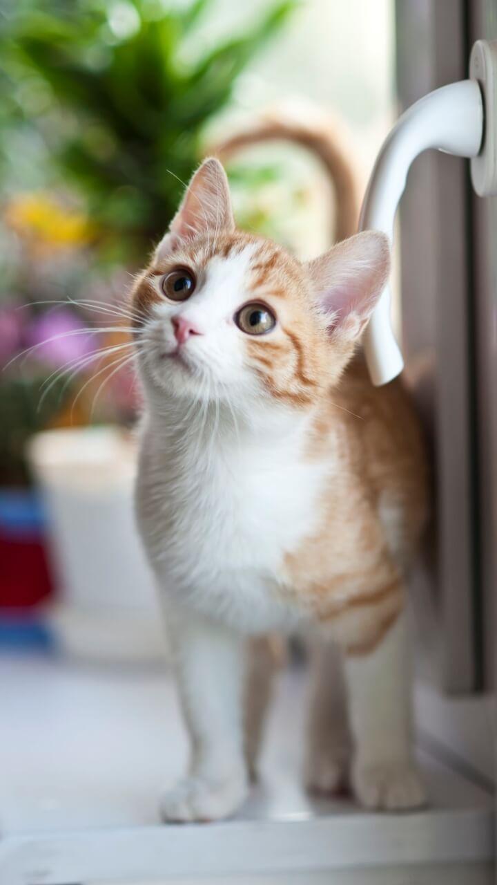 見上げてる猫
