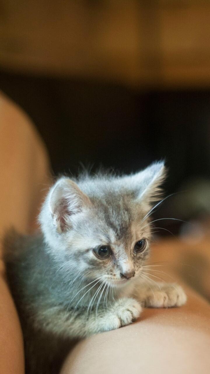 ひざの上の猫