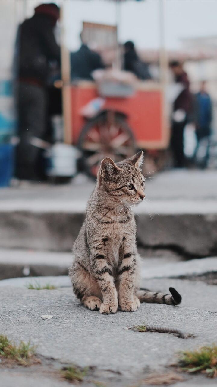 街の中の猫