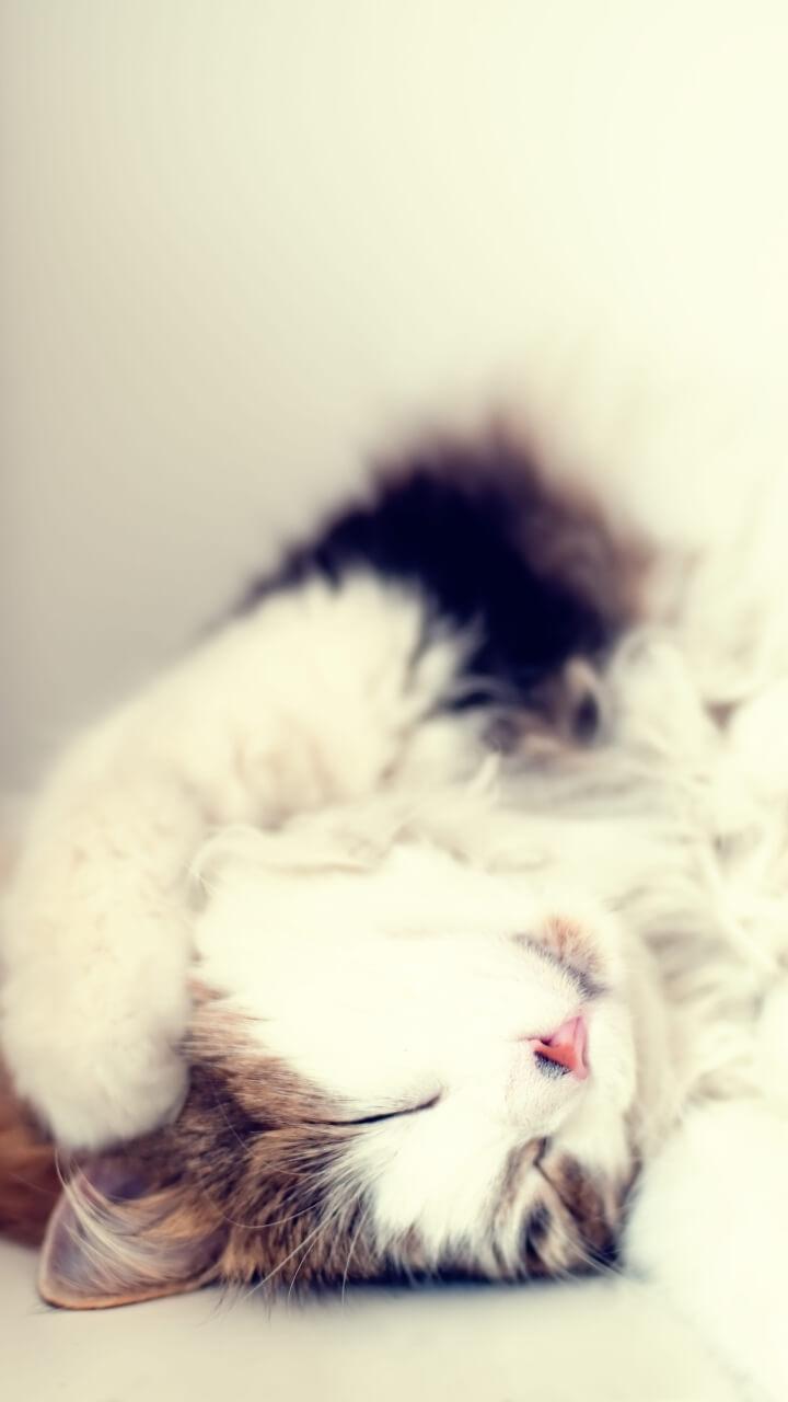 伸びをした猫