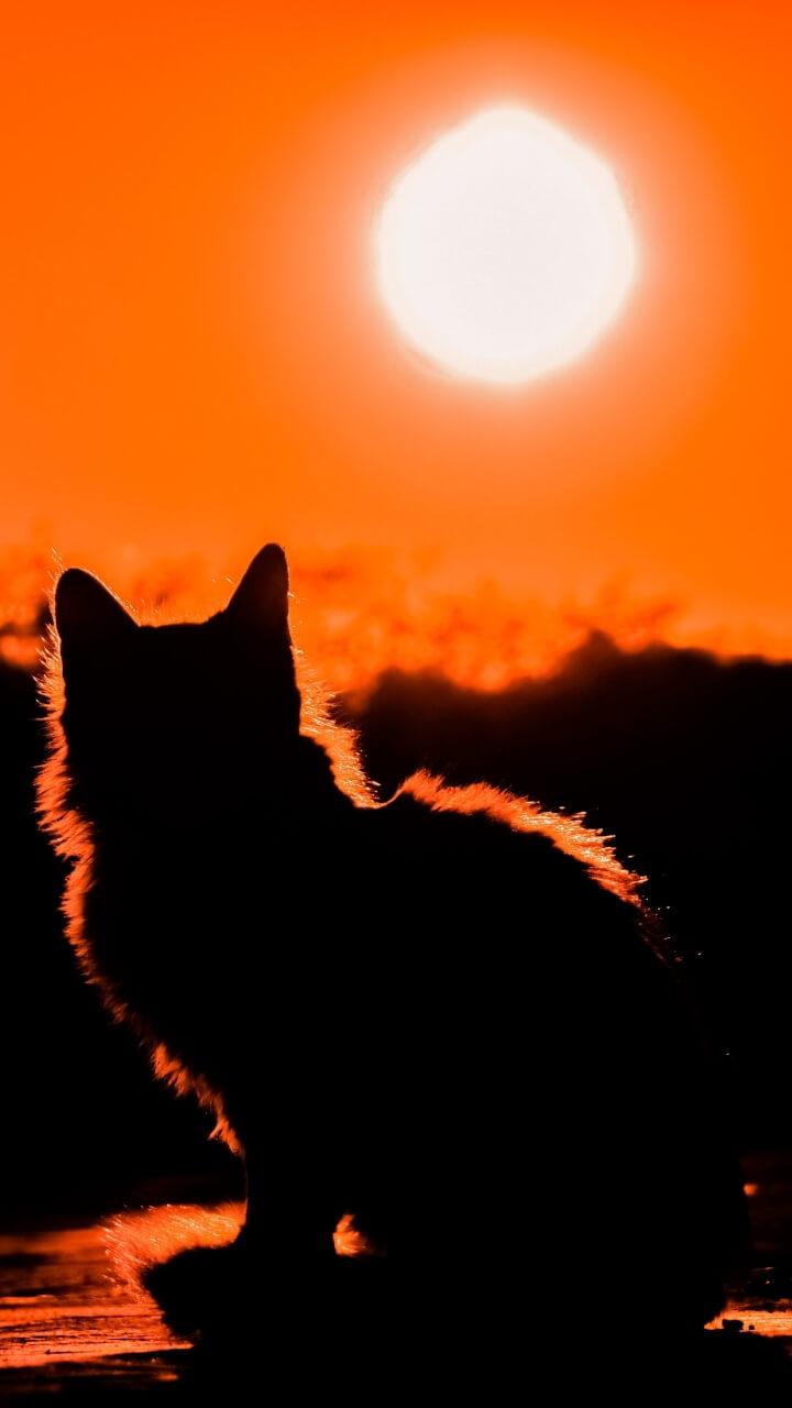 太陽と猫のシルエット