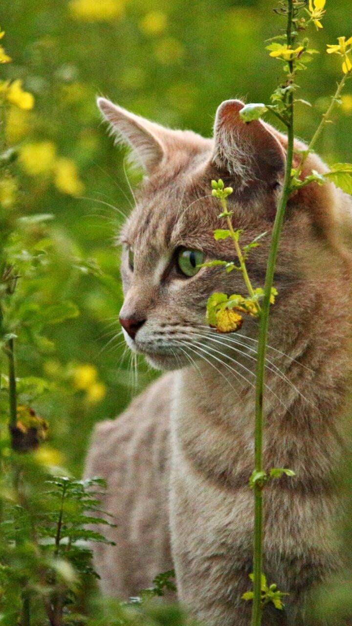 菜の花と猫