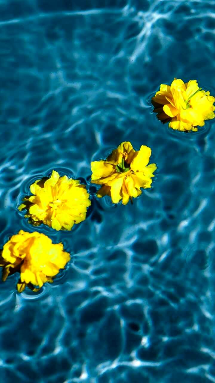 水に浮いた黄色の花