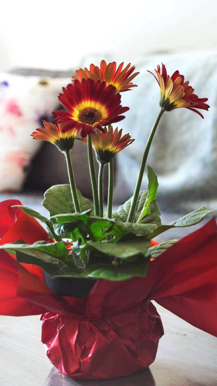 ラッピングされた花