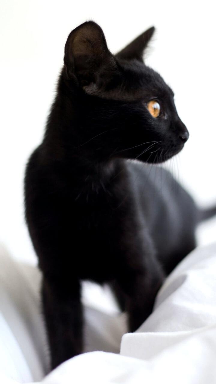 白背景に黒猫