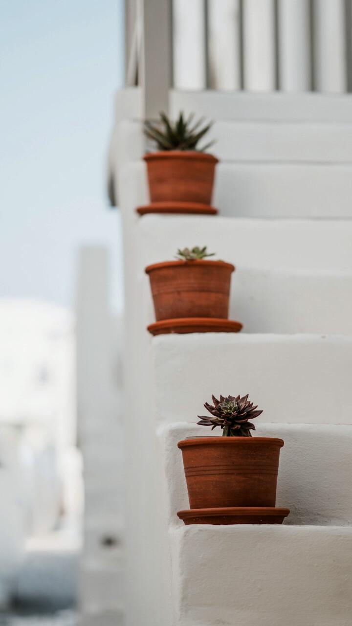 白い階段に植物