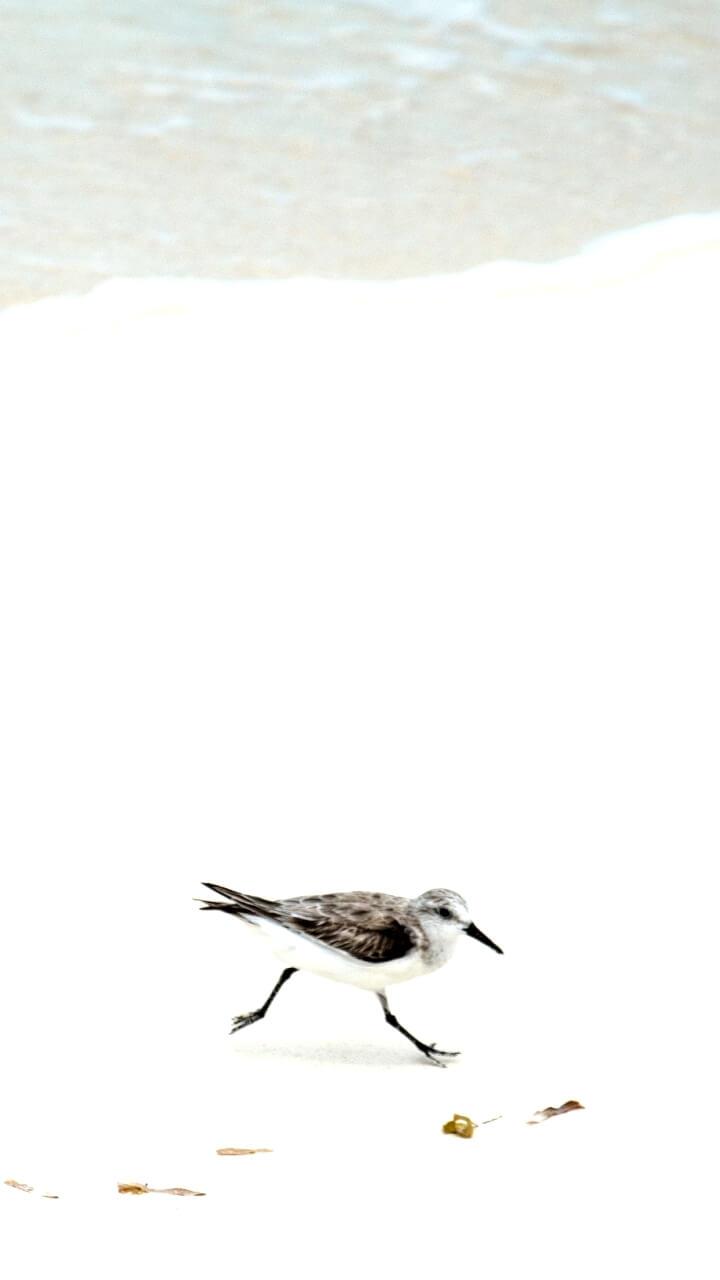 白い背景と鳥