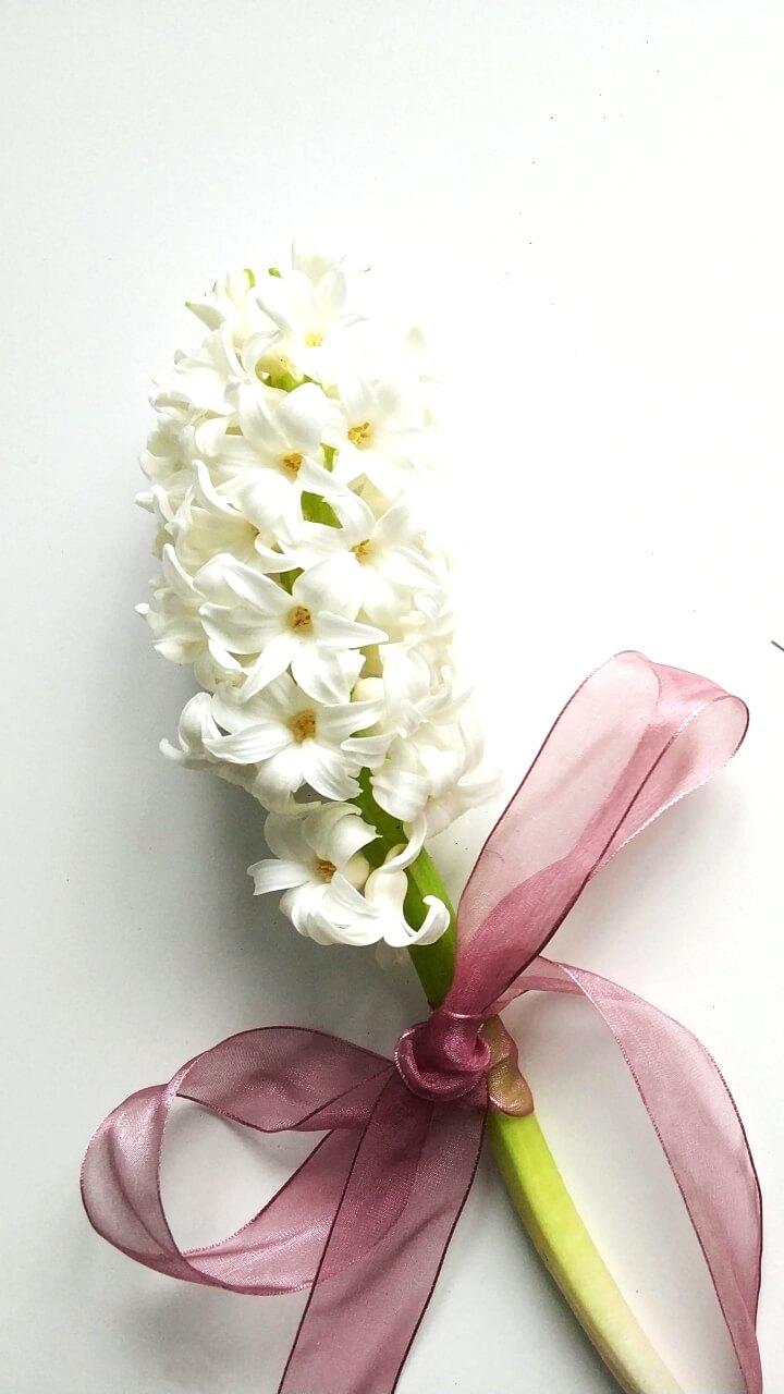 白い壁と花
