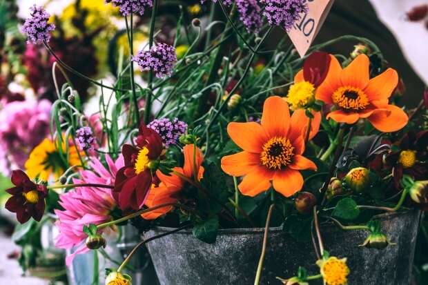 Twitterのヘッダーにすぐに使える花のフリー画像配信中!