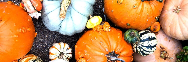色々なかぼちゃ