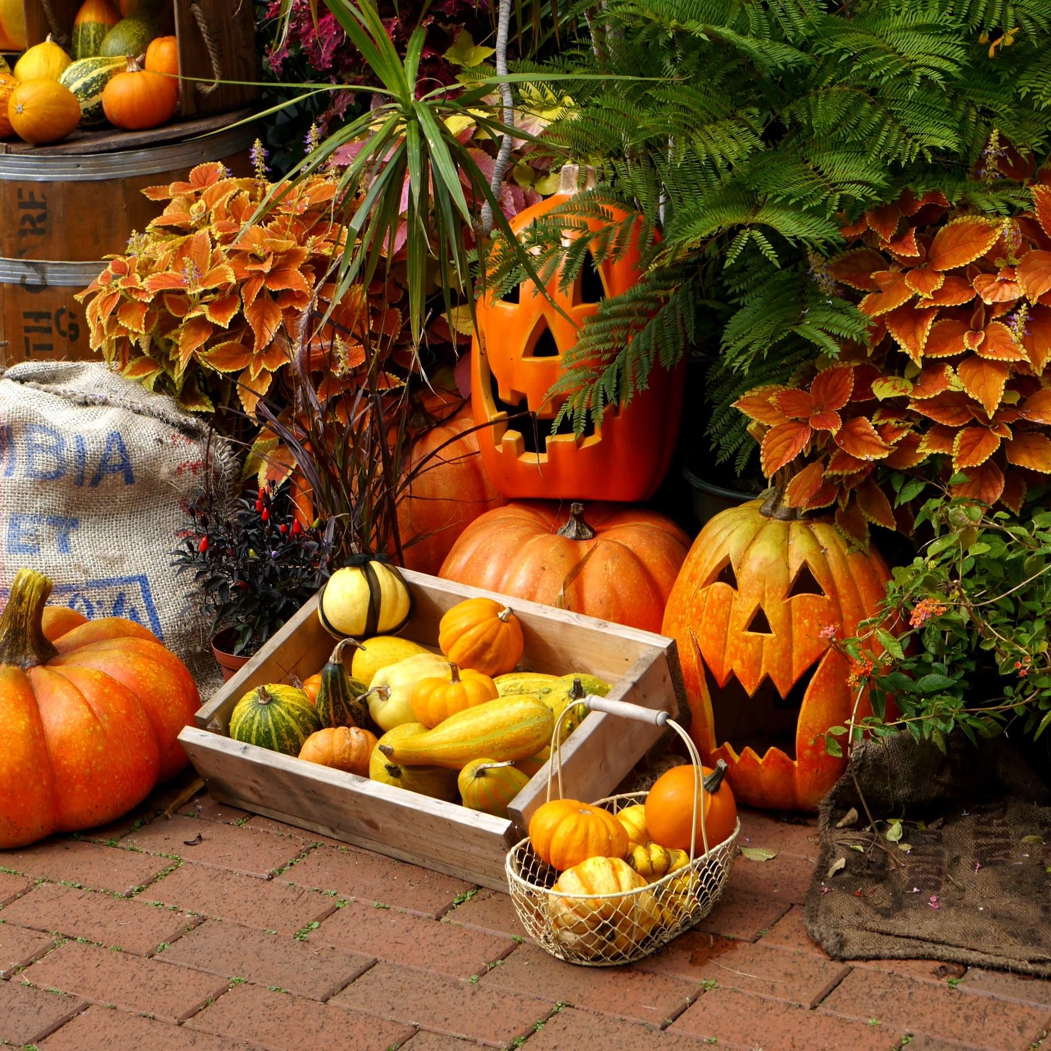 かぼちゃのハロウィン飾り