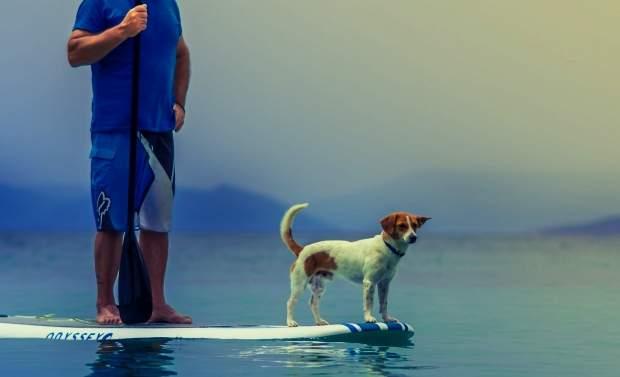 Twitterの犬のフリーヘッダー画像