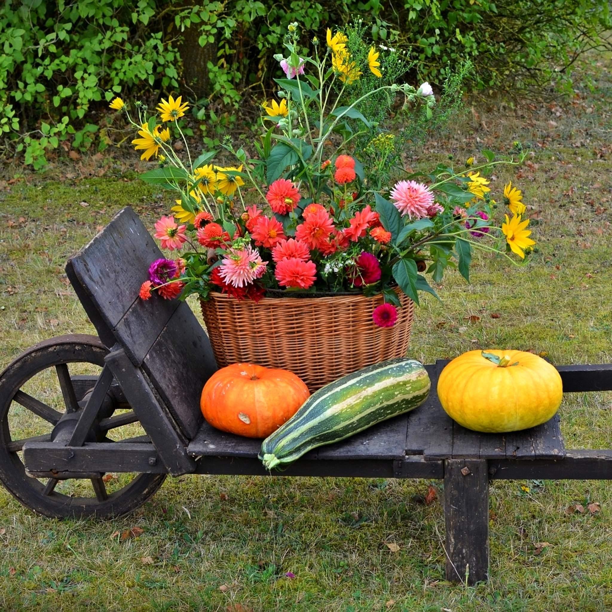 秋の花とかぼちゃ