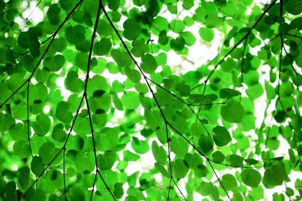 iPhone8・7・6・6SPlusのロック画面・ホーム画面緑の無料壁紙