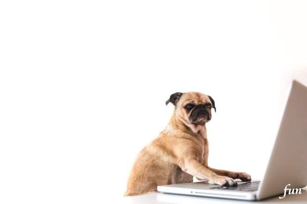 iPhone12・iPhone12Proロック画面等の犬の無料壁紙・待受けを配信中