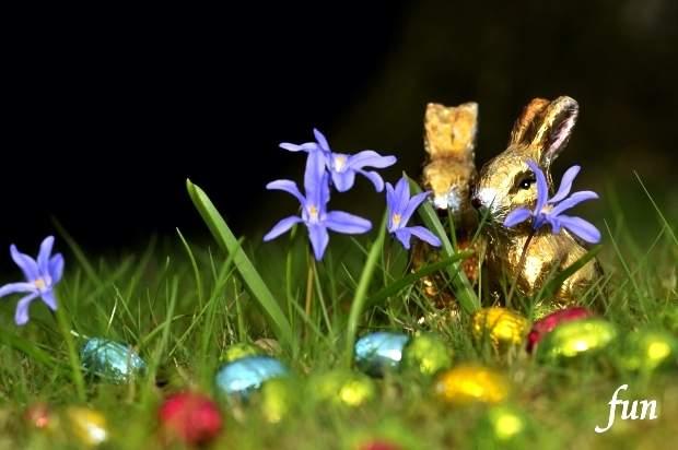 Twitterプロフィール背景春の無料画像