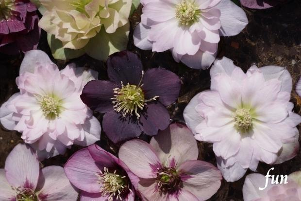 iPad10.2インチロック画面等のシンプルな花の無料壁紙・待受けを配信中