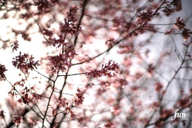 iPadPro11インチロック画面等の花の無料壁紙・待受け