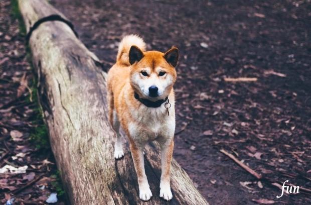 iPhone11Pro・Xs・Xロック画面等の犬の無料壁紙・待受けを配信中